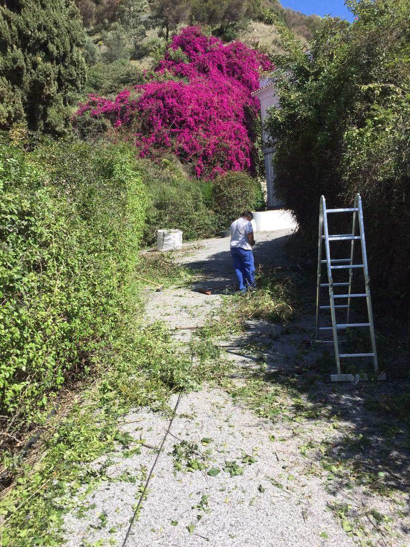 Jardineros En Malaga Expertos Paisajistas Diseamos Y